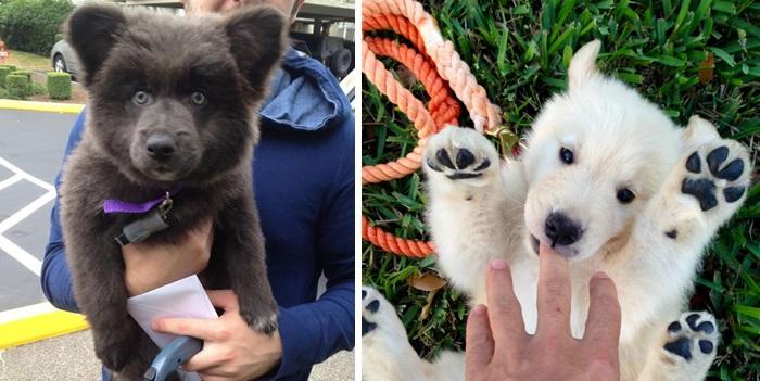 20 Cachorros que se parecem com ursos