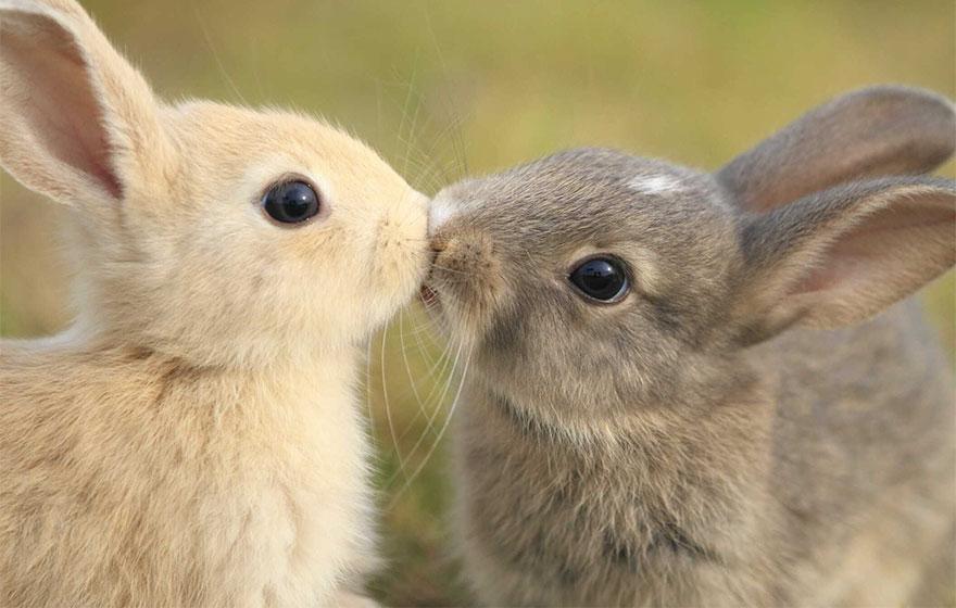 Animais se beijando - A prova de que beijos não são só para pessoas (13)