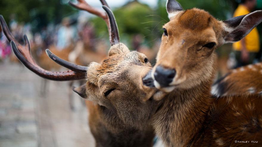 Animais se beijando - A prova de que beijos não são só para pessoas (14)