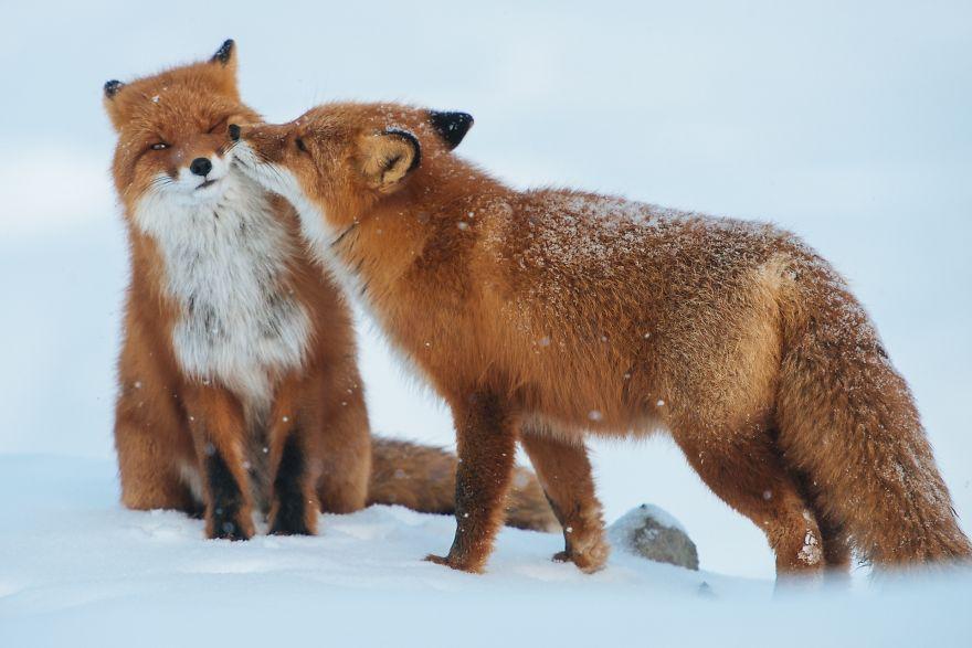 Animais se beijando - A prova de que beijos não são só para pessoas (3)
