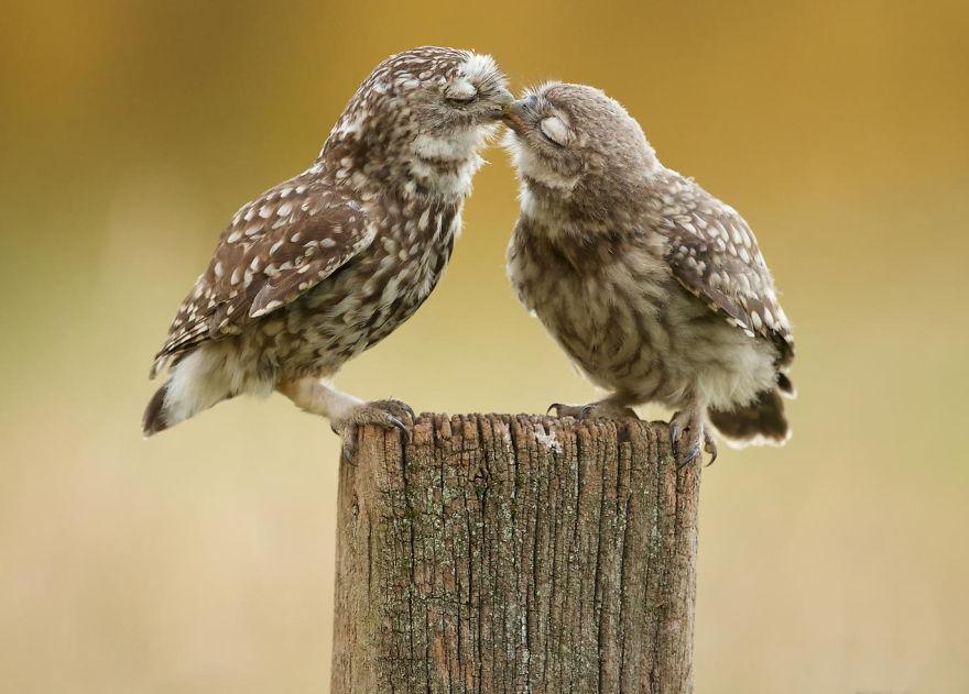 Animais se beijando - A prova de que beijos não são só para pessoas (4)