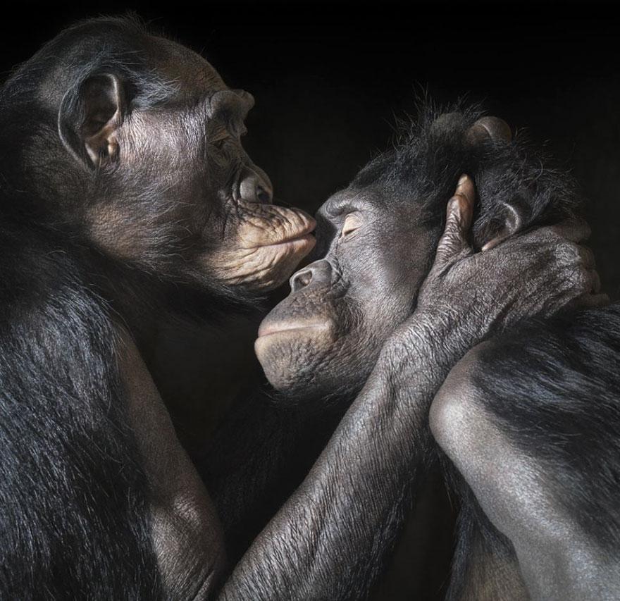 Animais se beijando - A prova de que beijos não são só para pessoas (5)