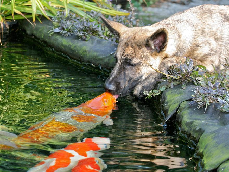 Animais se beijando - A prova de que beijos não são só para pessoas (6)
