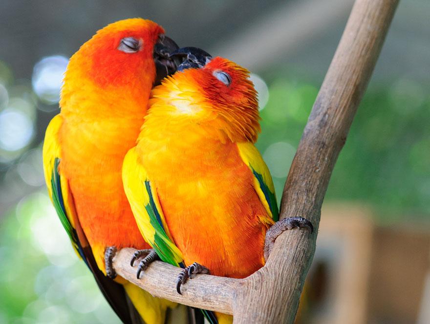 Animais se beijando - A prova de que beijos não são só para pessoas (7)
