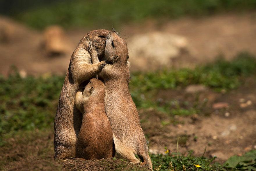 Animais se beijando - A prova de que beijos não são só para pessoas (8)