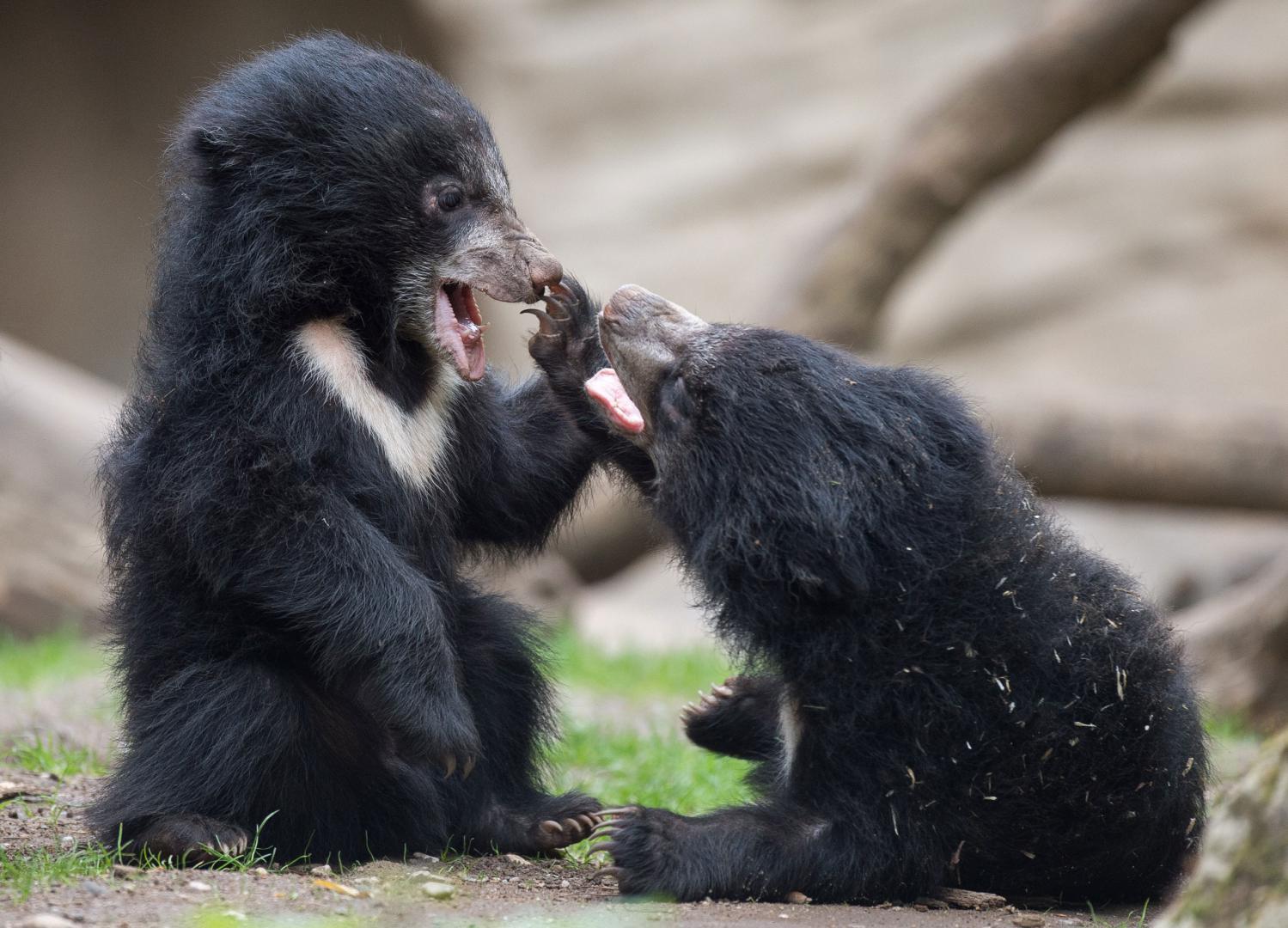 Fotos de Animais incríveis e surpreendentes tiradas na hora certa