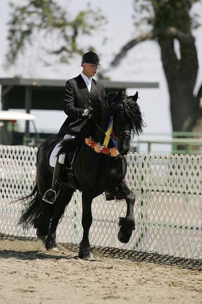 cavalo_mais_bonito_do_Mundo (5)