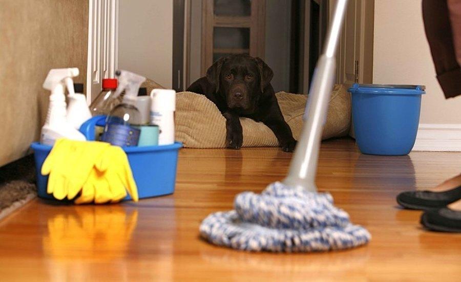 Como-preparar-sua-casa-para-seu-novo-animal-de-estimação (1)