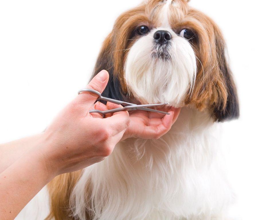 Como-preparar-sua-casa-para-seu-novo-animal-de-estimação (18)