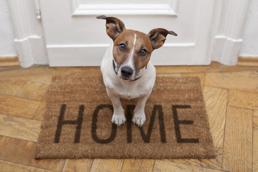 Como preparar sua casa para seu novo animal de estimação