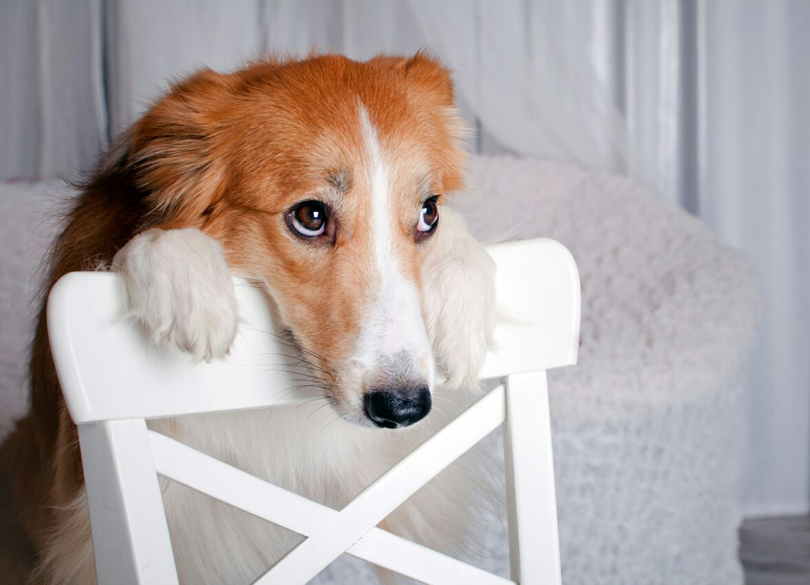 7 Fatos incríveis sobre seu cachorro que você não sabia!