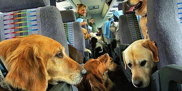 Como viajar com animais de estimação