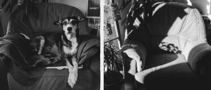 Ela queria fotografar a recuperação de seu cão, mas acabou fotografando sua despedida