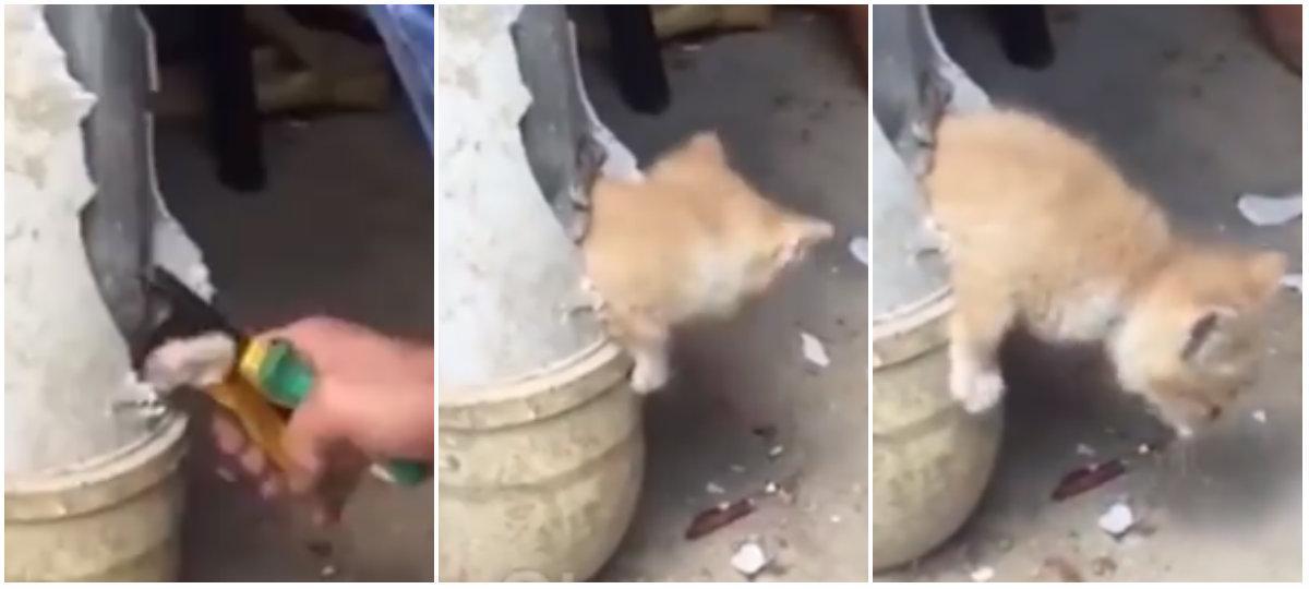 Gato fica preso em cano por três dias e é salvo por socorrista