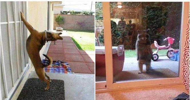 25 Imagens fofas e engraçadas de animais que querem entrar em casa