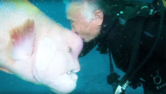 Mergulhador japonês visita peixe seu melhor amigo por mais de 25 anos