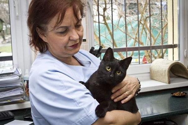 Clínica veterinária está oferecendo emprego para 'abraçador de gatos'