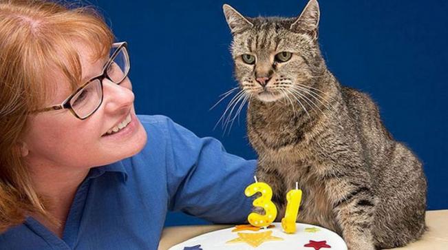 Conheça Nutmeg, o gato mais velho do mundo com 31 anos!