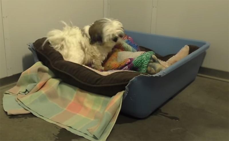 Animais abandonados dormem pela primeira vez em camas e a reação deles é indescritível!