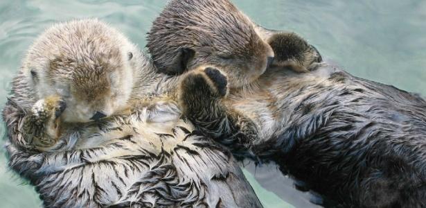 15 animais que dormem de um jeito muito curioso