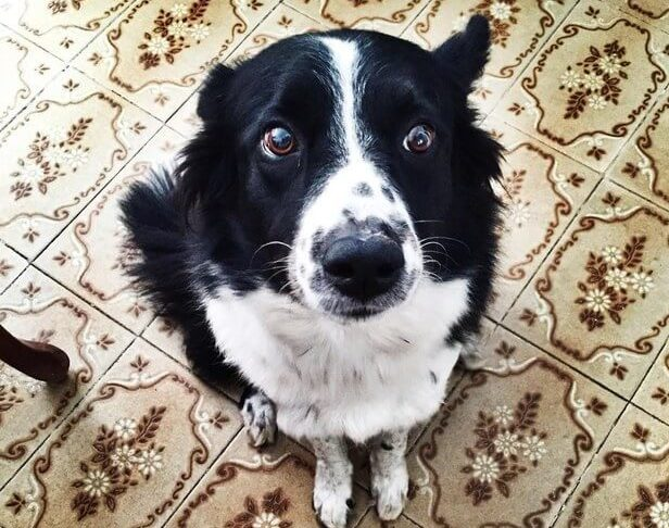12 sinais de que seu cachorro te faz de trouxa